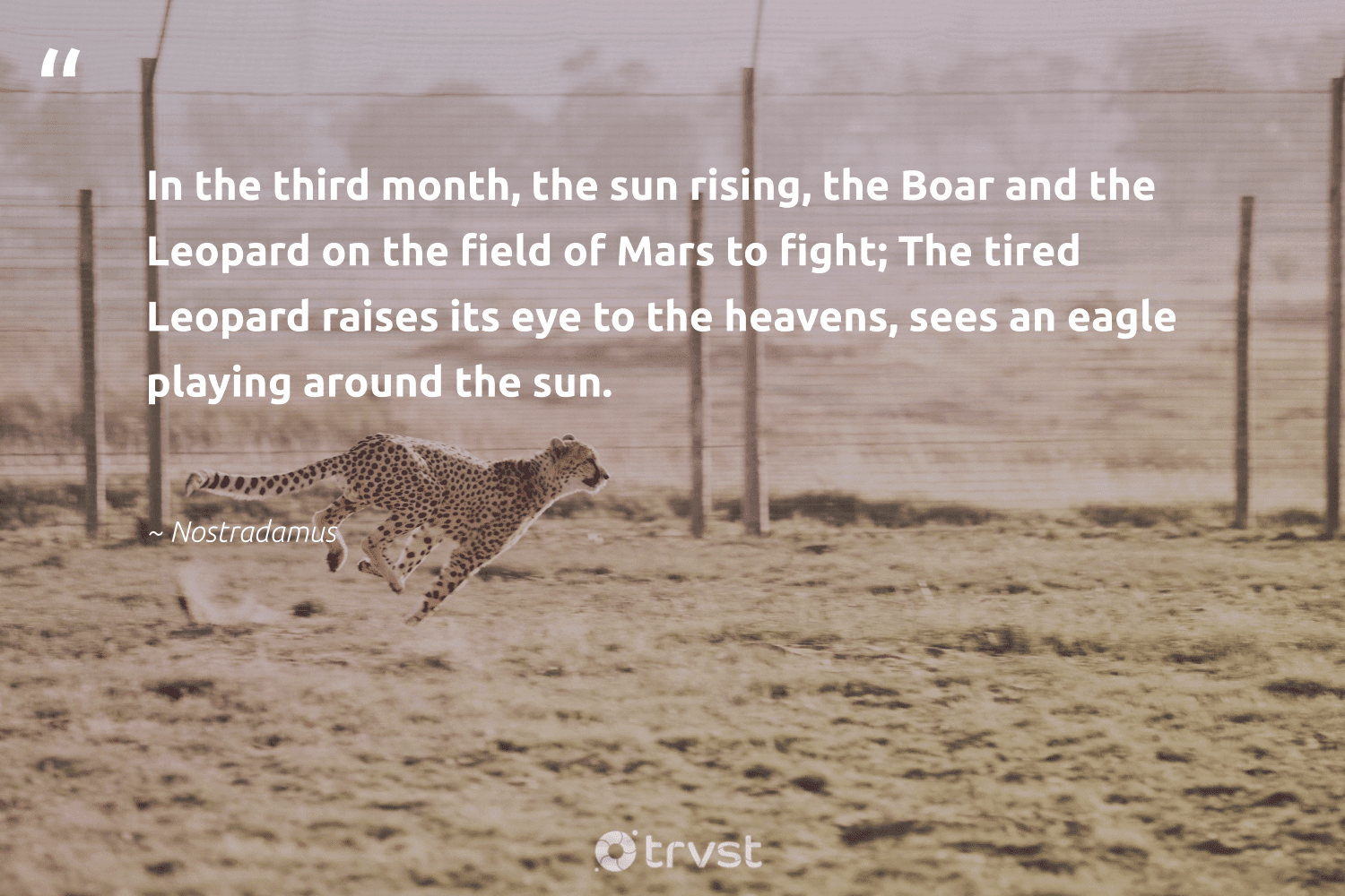 """""""In the third month, the sun rising, the Boar and the Leopard on the field of Mars to fight; The tired Leopard raises its eye to the heavens, sees an eagle playing around the sun.""""  - Nostradamus #trvst #quotes #leopard #wildlife #beinspired #biodiversity #gogreen #leopards #impact #protectnature #socialchange #nature"""