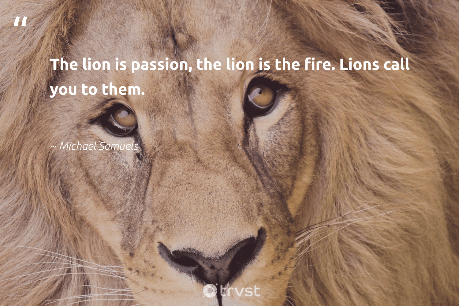 """""""The lion is passion, the lion is the fire. Lions call you to them.""""  - Michael Samuels #trvst #quotes #passion #lion #lions #sustainability #takeaction #wildlife #planetearthfirst #protectnature #gogreen #bigcats"""