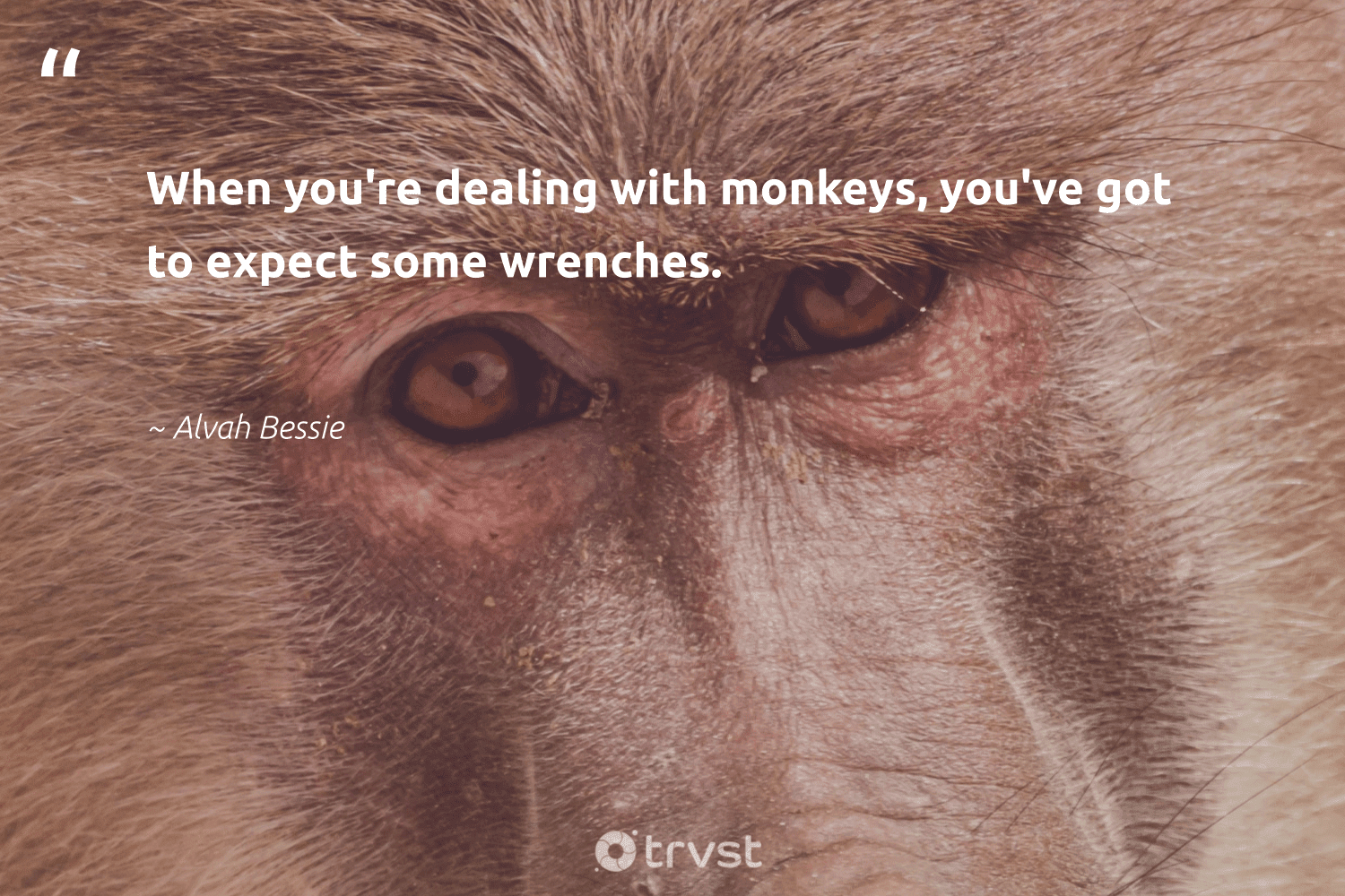 """""""When you're dealing with monkeys, you've got to expect some wrenches.""""  - Alvah Bessie #trvst #quotes #monkeys #conservation #planetearthfirst #wild #bethechange #sustainability #ecoconscious #perfectnature #impact #wildlifeprotection"""