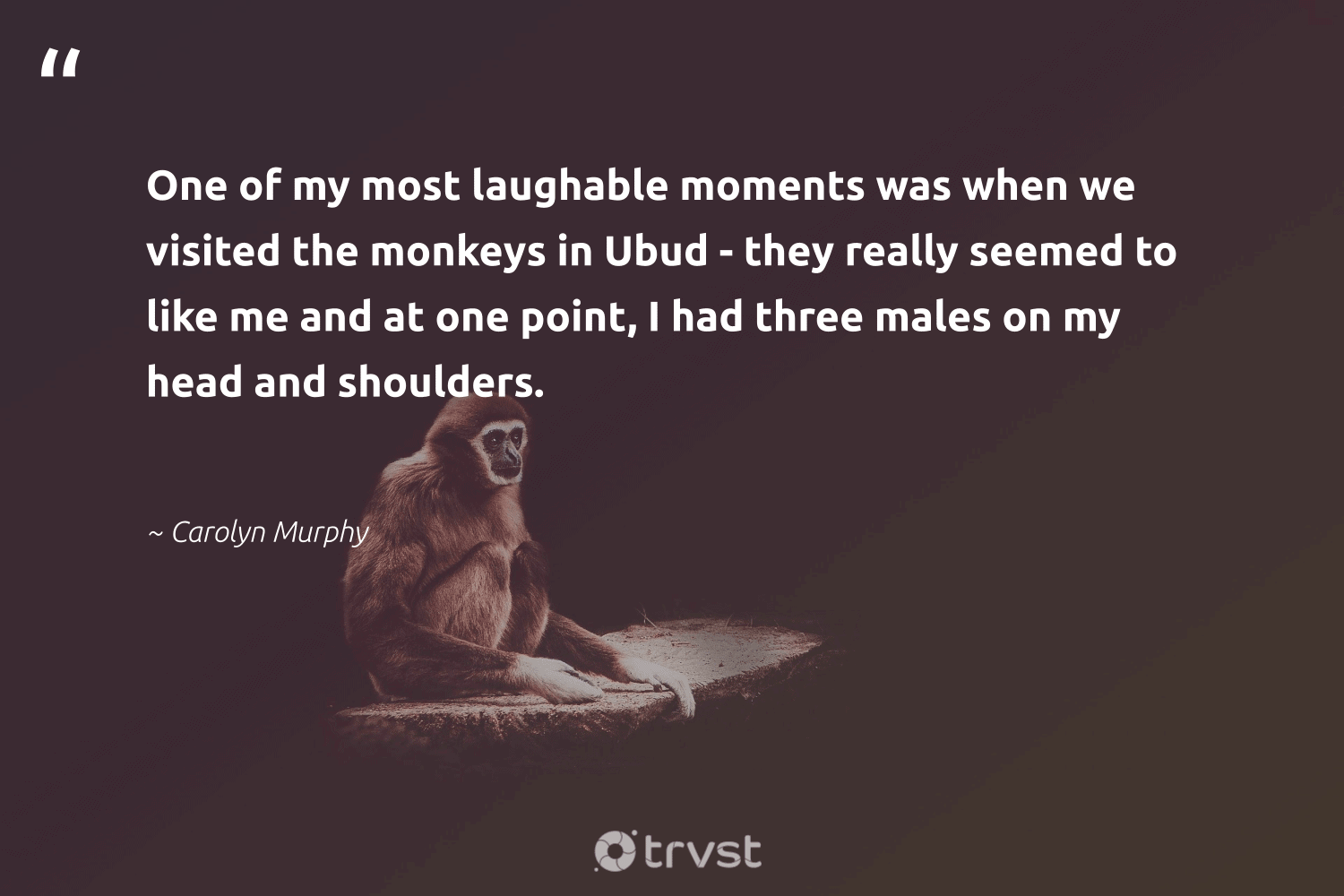 """""""One of my most laughable moments was when we visited the monkeys in Ubud - they really seemed to like me and at one point, I had three males on my head and shoulders.""""  - Carolyn Murphy #trvst #quotes #monkeys #biodiversity #dotherightthing #amazingworld #thinkgreen #protectnature #dosomething #splendidanimals #bethechange #wild"""