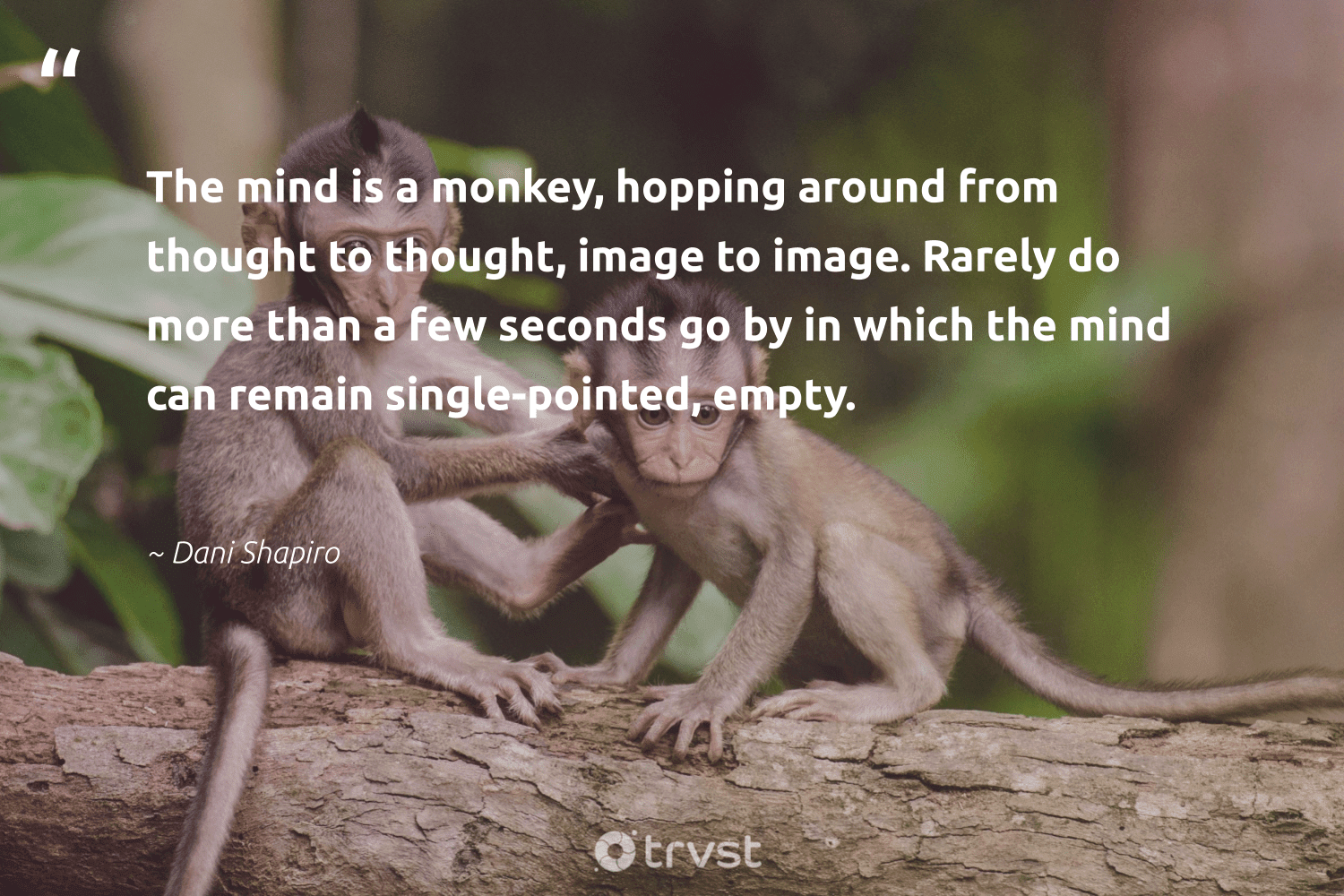 """""""The mind is a monkey, hopping around from thought to thought, image to image. Rarely do more than a few seconds go by in which the mind can remain single-pointed, empty.""""  - Dani Shapiro #trvst #quotes #monkey #domore #perfectnature #bethechange #wild #changetheworld #majesticwildlife #collectiveaction #wildlifeprotection #beinspired"""