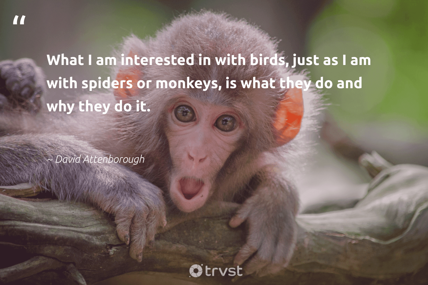 """""""What I am interested in with birds, just as I am with spiders or monkeys, is what they do and why they do it.""""  - David Attenborough #trvst #quotes #birds #monkeys #bird #conservation #nature #gogreen #monkey #geology #bethechange #wild"""