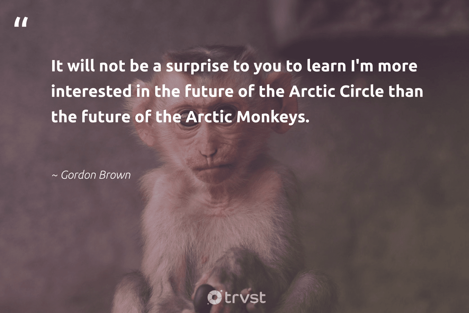 """""""It will not be a surprise to you to learn I'm more interested in the future of the Arctic Circle than the future of the Arctic Monkeys.""""  - Gordon Brown #trvst #quotes #arctic #monkeys #majesticwildlife #bethechange #monkey #planetearthfirst #wildlifeprotection #thinkgreen #biodiversity #dogood"""