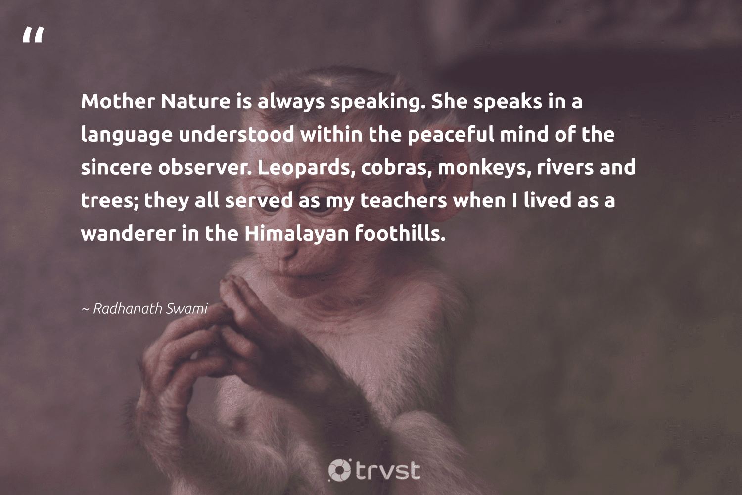 """""""Mother Nature is always speaking. She speaks in a language understood within the peaceful mind of the sincere observer. Leopards, cobras, monkeys, rivers and trees; they all served as my teachers when I lived as a wanderer in the Himalayan foothills.""""  - Radhanath Swami #trvst #quotes #nature #rivers #mothernature #leopards #monkeys #environment #earth #perfectnature #noplanetb #changetheworld"""