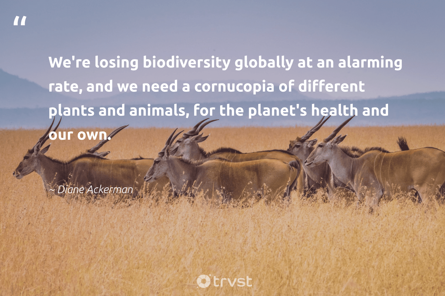 """""""We're losing biodiversity globally at an alarming rate, and we need a cornucopia of different plants and animals, for the planet's health and our own.""""  - Diane Ackerman #trvst #quotes #biodiversity #animals #health #environment #bigcat #nature #collectiveaction #conservation #fish #wildlifephotography"""
