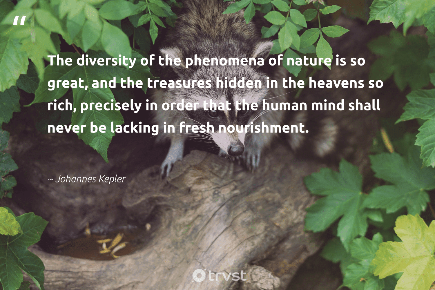 """""""The diversity of the phenomena of nature is so great, and the treasures hidden in the heavens so rich, precisely in order that the human mind shall never be lacking in fresh nourishment.""""  - Johannes Kepler #trvst #quotes #nature #diversity #representationmatters #planet #invertebrate #socialgood #bethechange #discrimination #environment #tiger"""