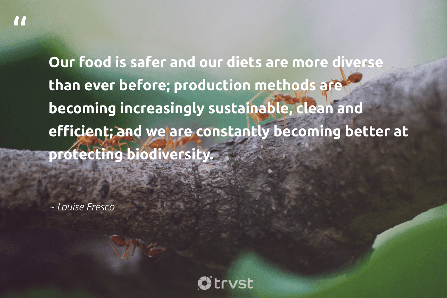 """""""Our food is safer and our diets are more diverse than ever before; production methods are becoming increasingly sustainable, clean and efficient; and we are constantly becoming better at protecting biodiversity.""""  - Louise Fresco #trvst #quotes #biodiversity #sustainable #food #environment #biology #nature #socialimpact #conservation #sanctuary #natural"""