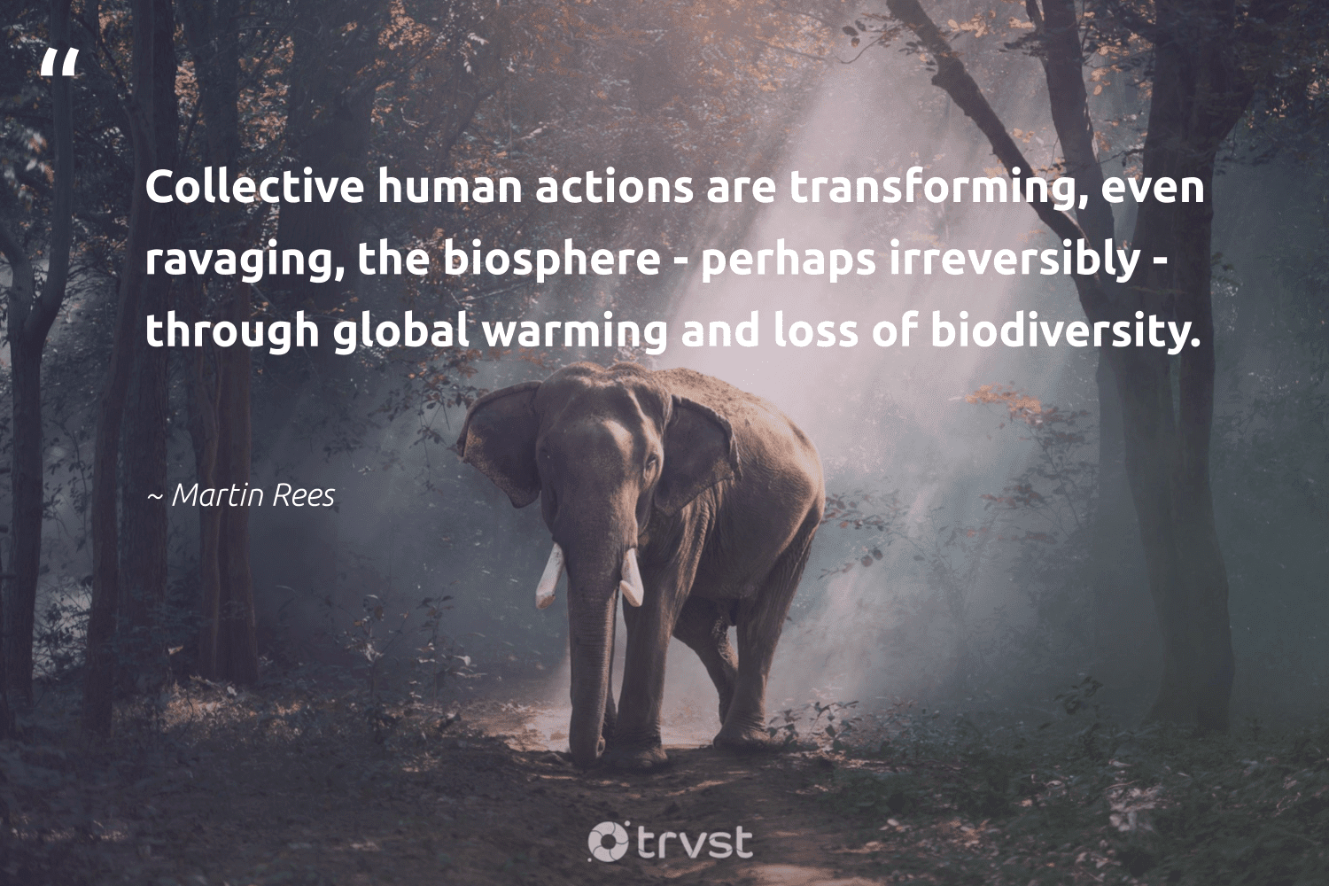 """""""Collective human actions are transforming, even ravaging, the biosphere - perhaps irreversibly - through global warming and loss of biodiversity.""""  - Martin Rees #trvst #quotes #biodiversity #globalwarming #nature #forscience #fish #takeaction #environment #sanctuary #science #bethechange"""