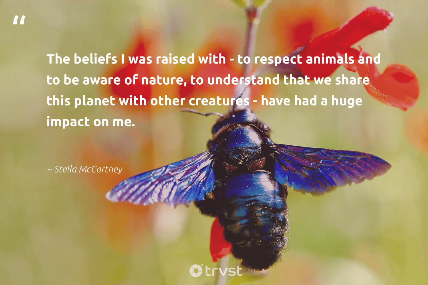 """""""The beliefs I was raised with - to respect animals and to be aware of nature, to understand that we share this planet with other creatures - have had a huge impact on me.""""  - Stella McCartney #trvst #quotes #impact #nature #planet #animals #mothernature #environment #science #savetheplanet #beinspired #conservation"""