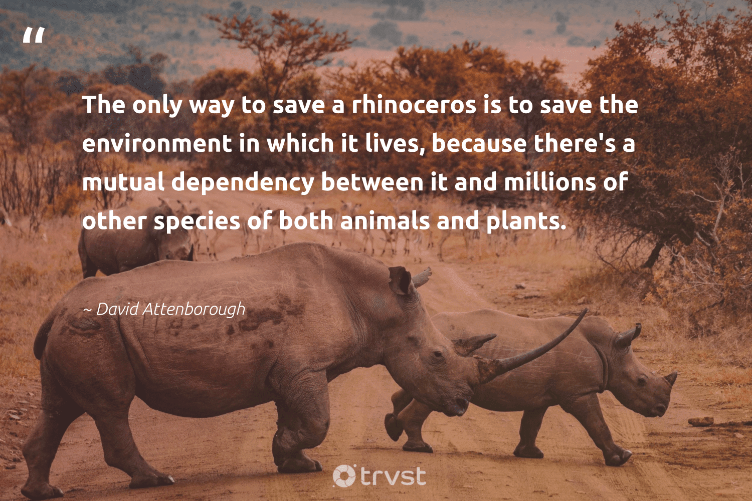 """""""The only way to save a rhinoceros is to save the environment in which it lives, because there's a mutual dependency between it and millions of other species of both animals and plants.""""  - David Attenborough #trvst #quotes #environment #animals #rhinoceros #planet #wild #noplanetb #dogood #nature #amazingworld #climatechange"""