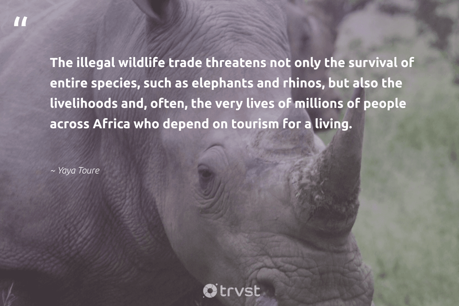 """""""The illegal wildlife trade threatens not only the survival of entire species, such as elephants and rhinos, but also the livelihoods and, often, the very lives of millions of people across Africa who depend on tourism for a living.""""  - Yaya Toure #trvst #quotes #africa #wildlife #elephants #people #animal #protectnature #natural #bethechange #animals #biodiversity"""