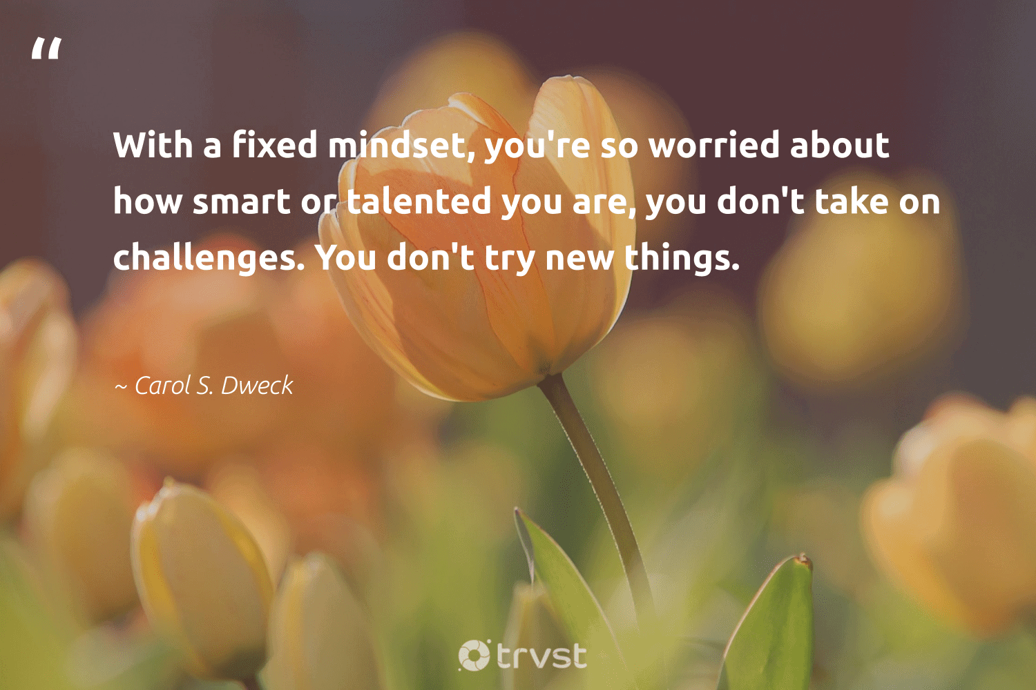 """""""With a fixed mindset, you're so worried about how smart or talented you are, you don't take on challenges. You don't try new things.""""  - Carol S. Dweck #trvst #quotes #mindset #mindfulness #health #changemakers #changetheworld #creativemindset #togetherwecan #begreat #ecoconscious #meditate"""