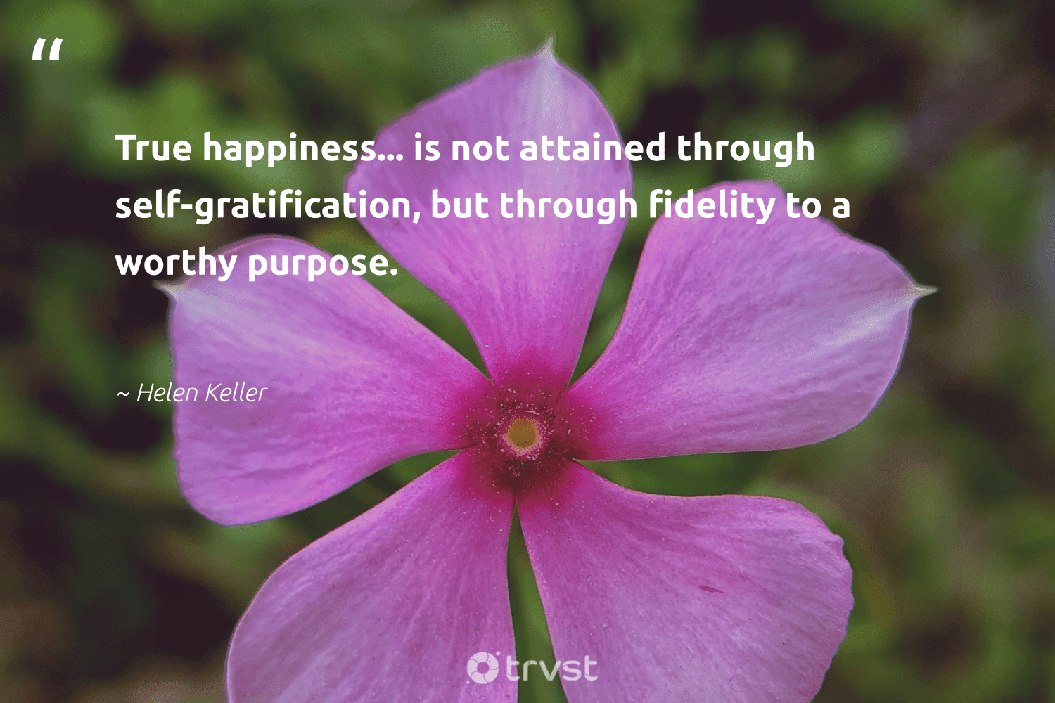 """""""True happiness... is not attained through self-gratification, but through fidelity to a worthy purpose.""""  - Helen Keller #trvst #quotes #purpose #happiness #findingpupose #changemakers #togetherwecan #socialimpact #findpurpose #mindset #health #planetearthfirst"""