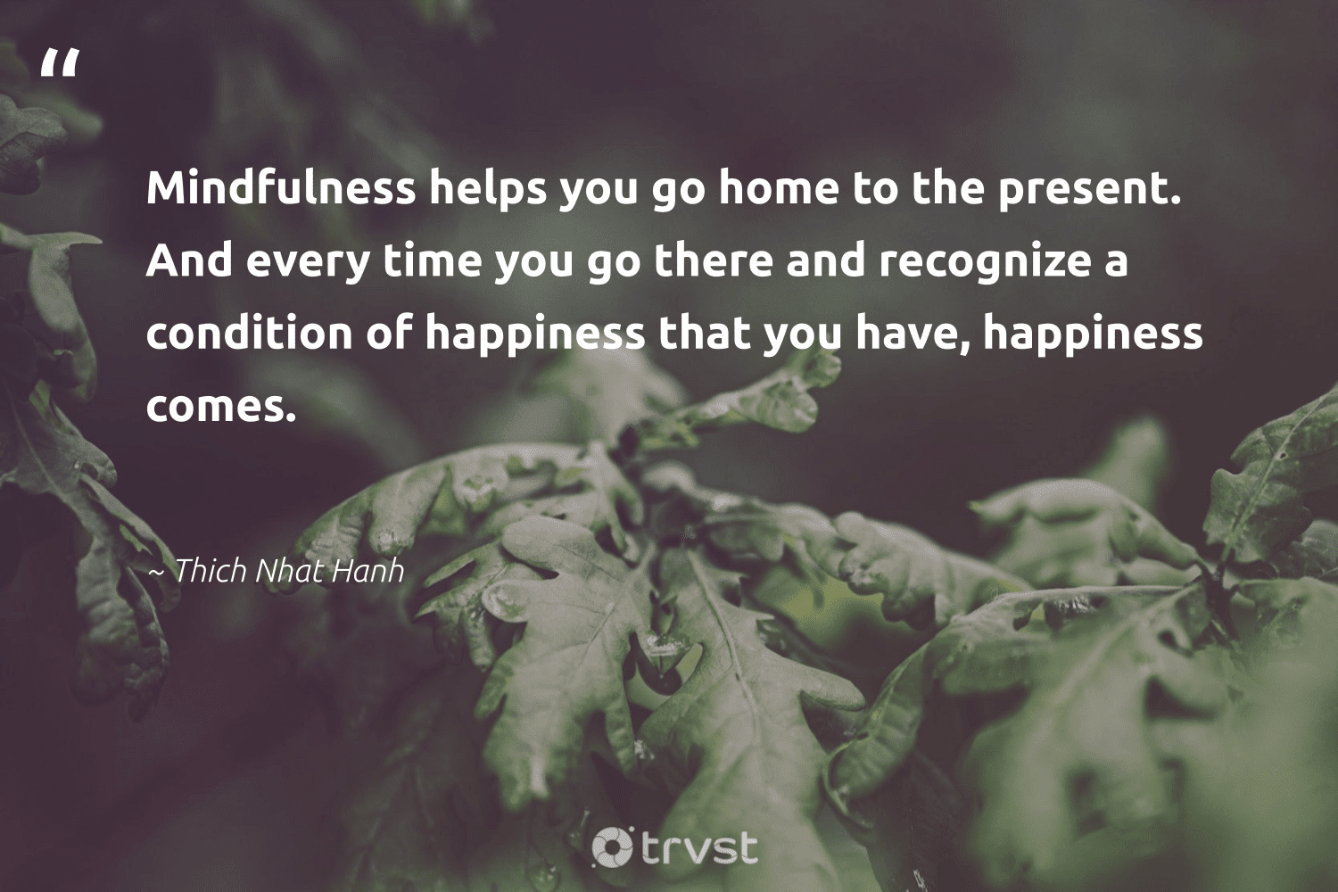 """""""Mindfulness helps you go home to the present. And every time you go there and recognize a condition of happiness that you have, happiness comes.""""  - Thich Nhat Hanh #trvst #quotes #mindset #happiness #mindfulness #meditation #begreat #health #collectiveaction #goals #nevergiveup #togetherwecan"""