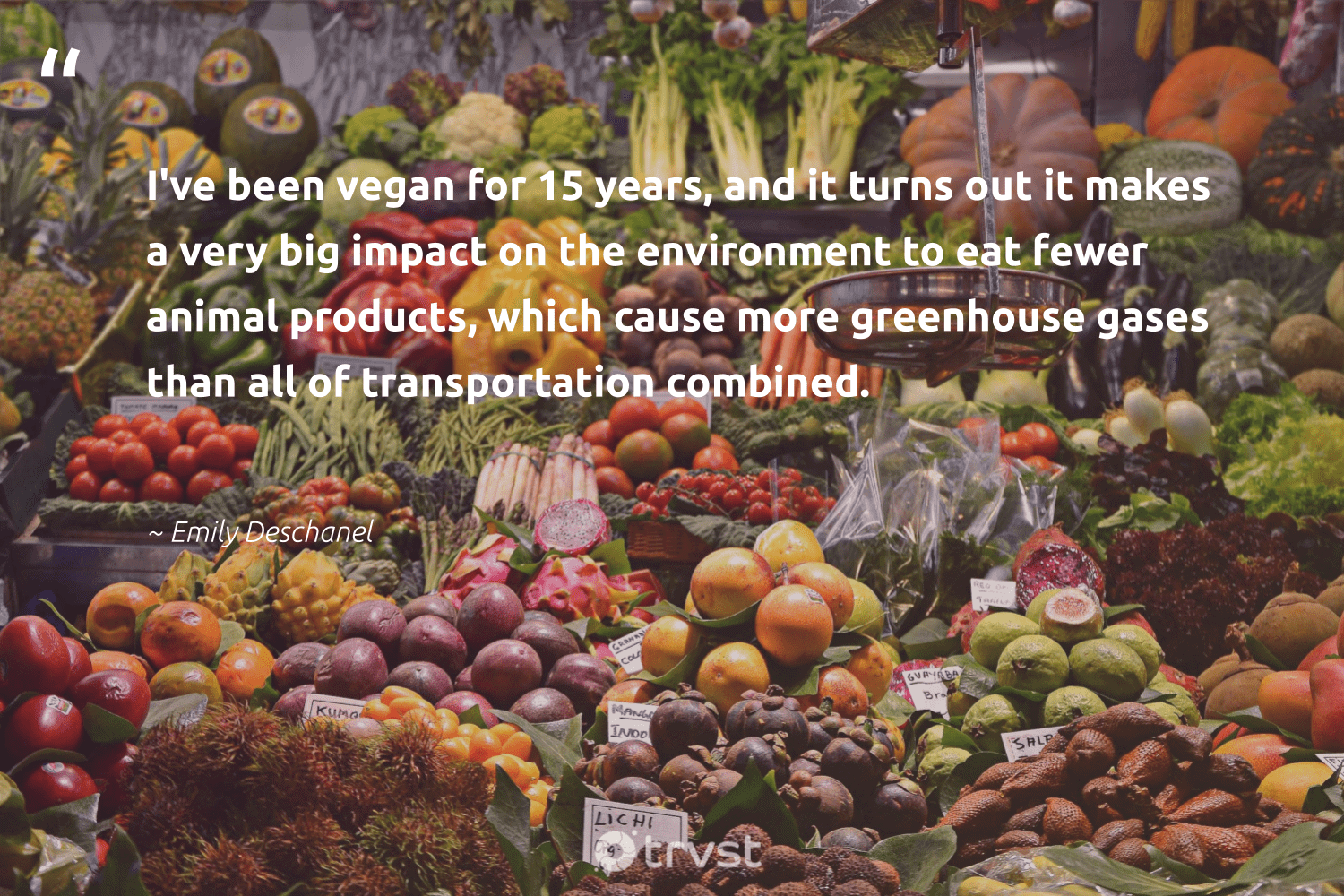 """""""I've been vegan for 15 years, and it turns out it makes a very big impact on the environment to eat fewer animal products, which cause more greenhouse gases than all of transportation combined.""""  - Emily Deschanel #trvst #quotes #impact #environment #animal #cause #vegan #earth #sustainable #naturelovers #socialchange #mothernature"""