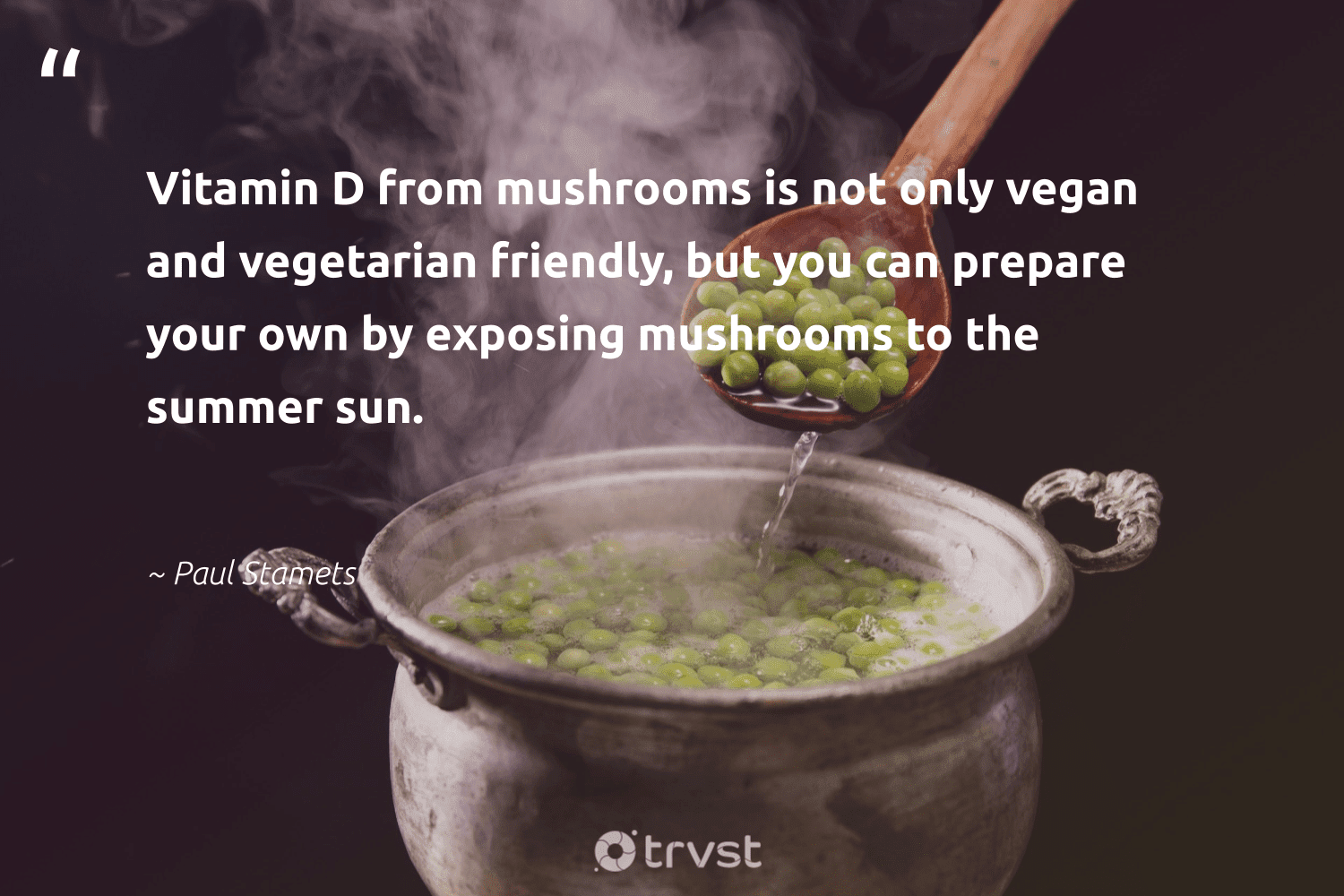 """""""Vitamin D from mushrooms is not only vegan and vegetarian friendly, but you can prepare your own by exposing mushrooms to the summer sun.""""  - Paul Stamets #trvst #quotes #vegan #vegetarian #veganfood #govegan #greenliving #fashion #socialimpact #whatveganseat #veganfoodshare #sustainable"""