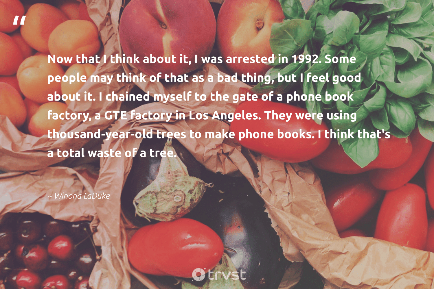 """""""Now that I think about it, I was arrested in 1992. Some people may think of that as a bad thing, but I feel good about it. I chained myself to the gate of a phone book factory, a GTE factory in Los Angeles. They were using thousand-year-old trees to make phone books. I think that's a total waste of a tree.""""  - Winona LaDuke #trvst #quotes #waste #trees #rainforest #dosomething #environmentallyfriendly #thinkgreen #forest #waronwaste #noplanetb #socialchange"""