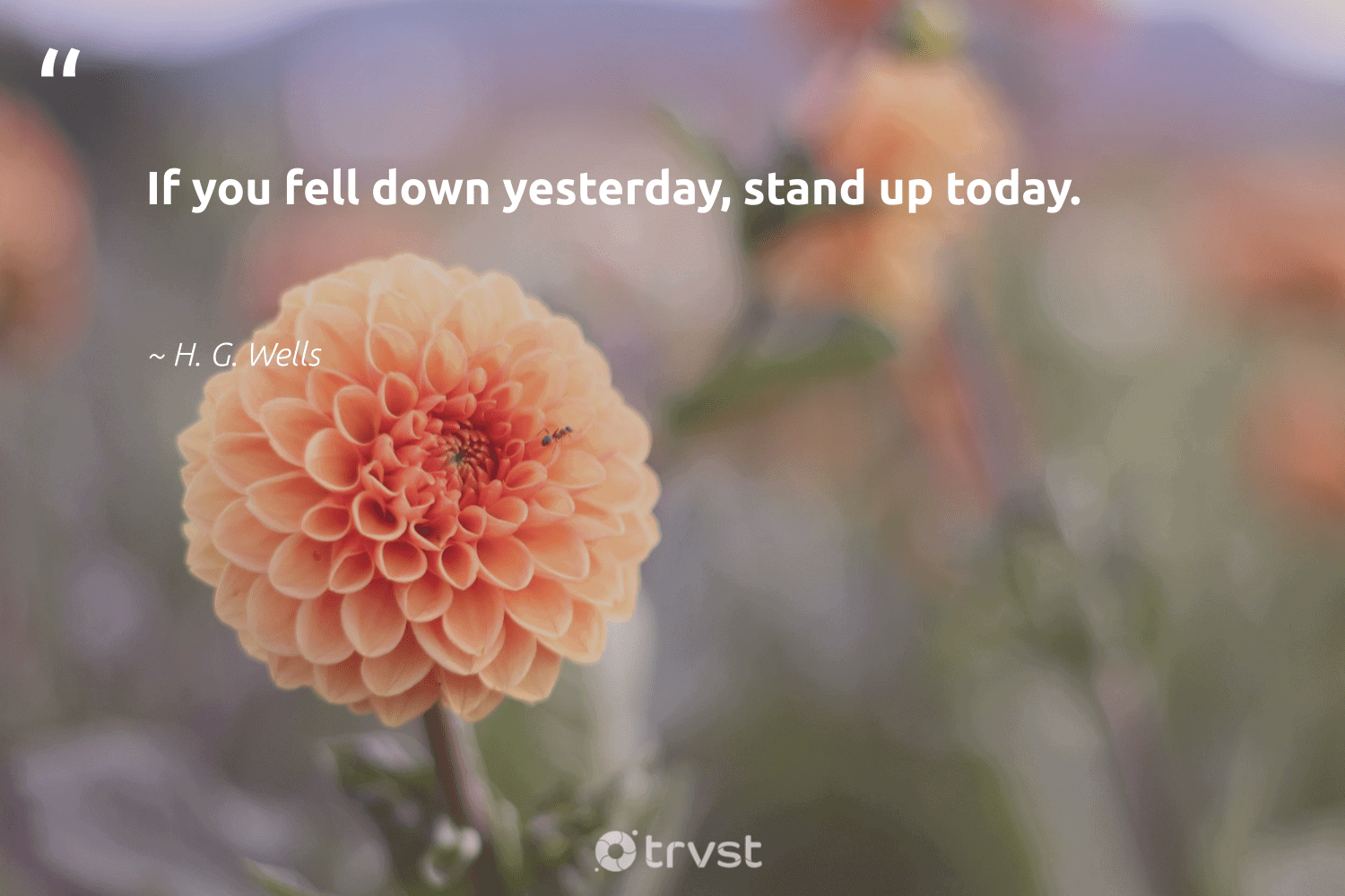 """""""If you fell down yesterday, stand up today.""""  - H. G. Wells #trvst #quotes #softskills #dogood #futureofwork #gogreen #nevergiveup #thinkgreen #begreat #impact #ecoconscious #bethechange"""