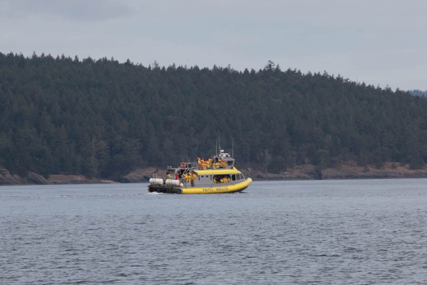 Whale-Watchin in Tofino