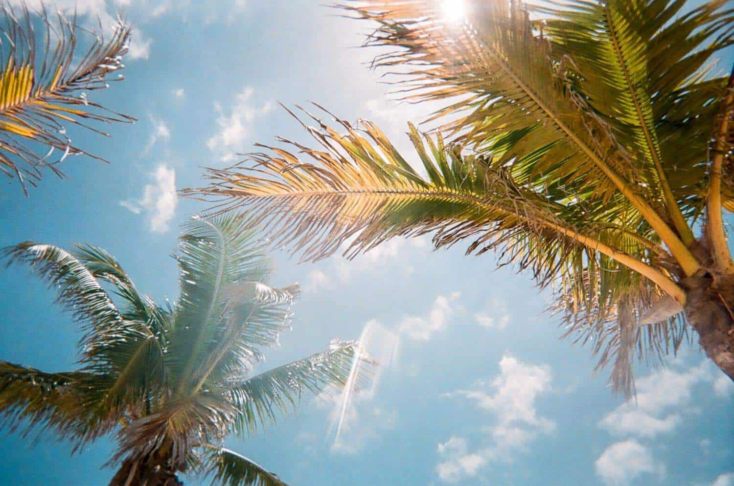 Palm trees and the sky in Florida.