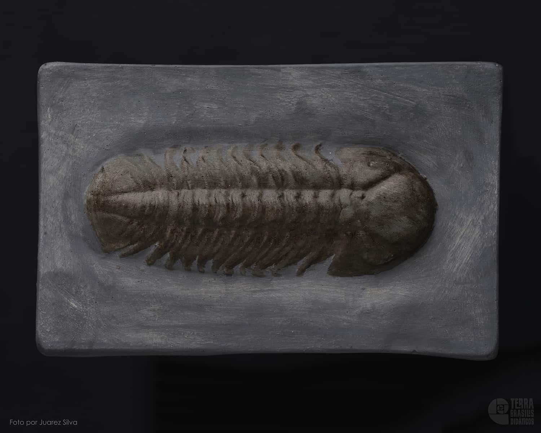 Trilobita: Chotecops ferdinandi
