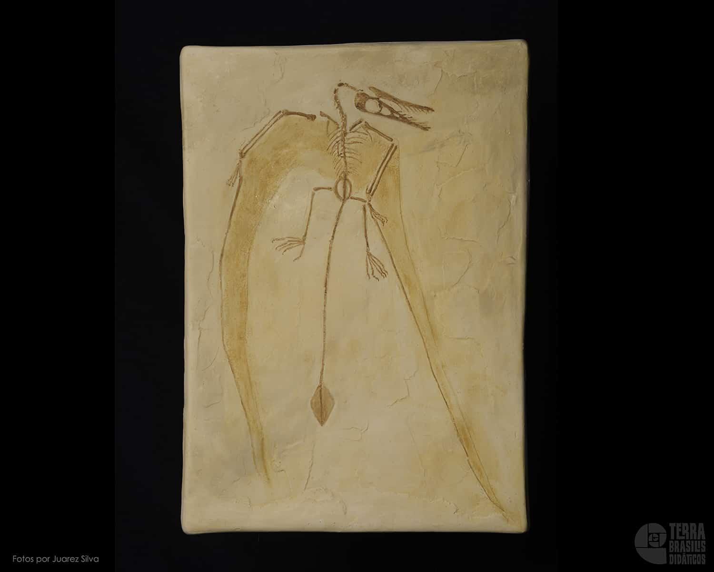 Pterossauro: Rhamphorynchus sp