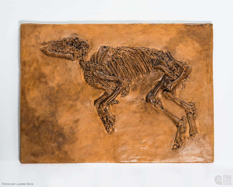 Cavalo: Propalaeotherium parvurum