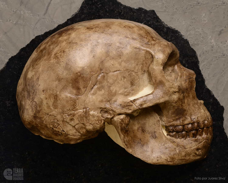 Hemicrânio direito de Homo s. neanderthalensis