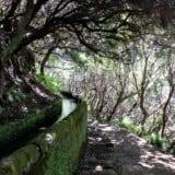Madera – Lewady, czyli spacer po centralnej Maderze