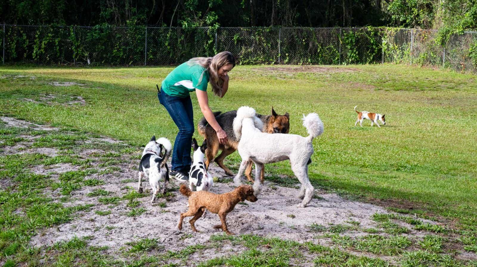 Doggie Daycare Overnight Dog Boarding & Pet Grooming Bradenton FL Image Carousel 2