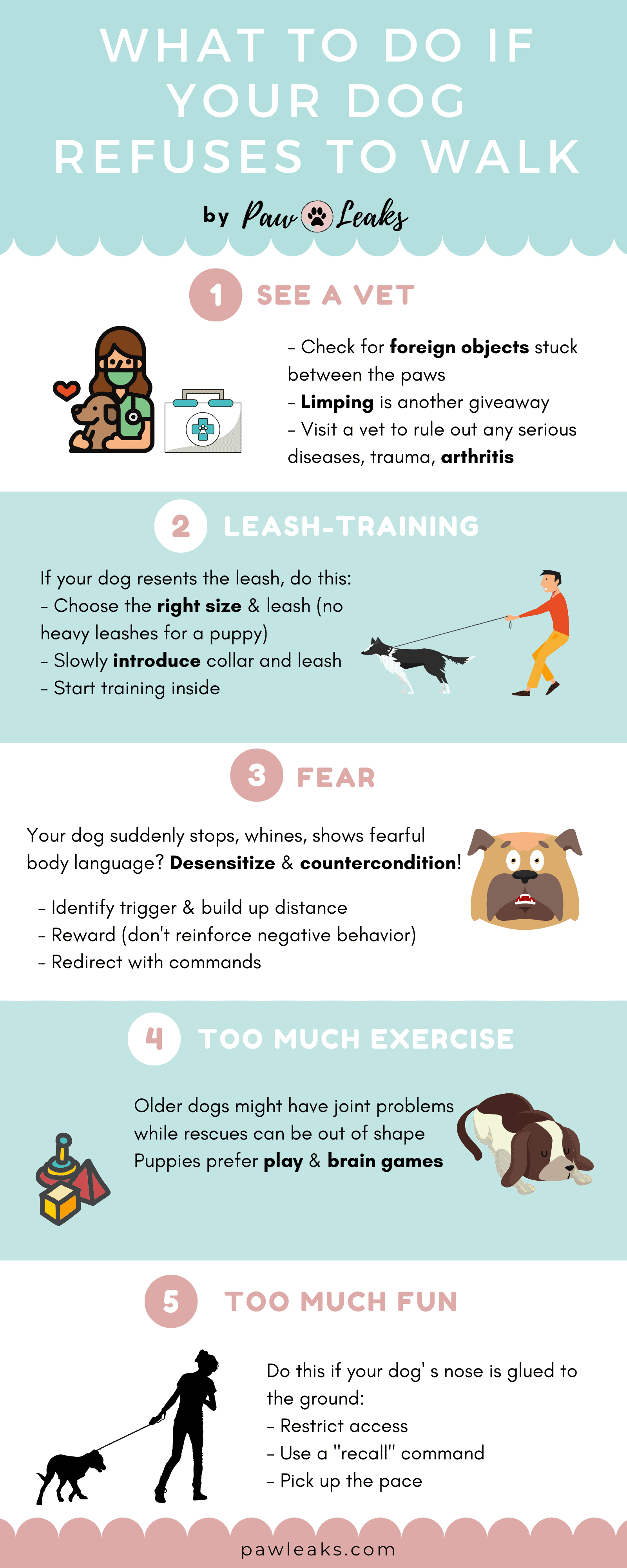 Infographic on five steps to follow if your dog refuses to walk.