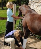 5 Steps to Build a Better Emergency Contact Sheet for Your Boarding Stable