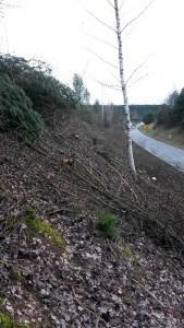 Oftmals kerngesunde Bäume und Sträucher werden entlang von Straßen rigoros beseitigt Bild © VLAB