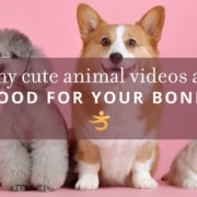 Cute animal videos are good for bones