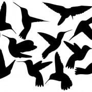 kolibrie muurstickers