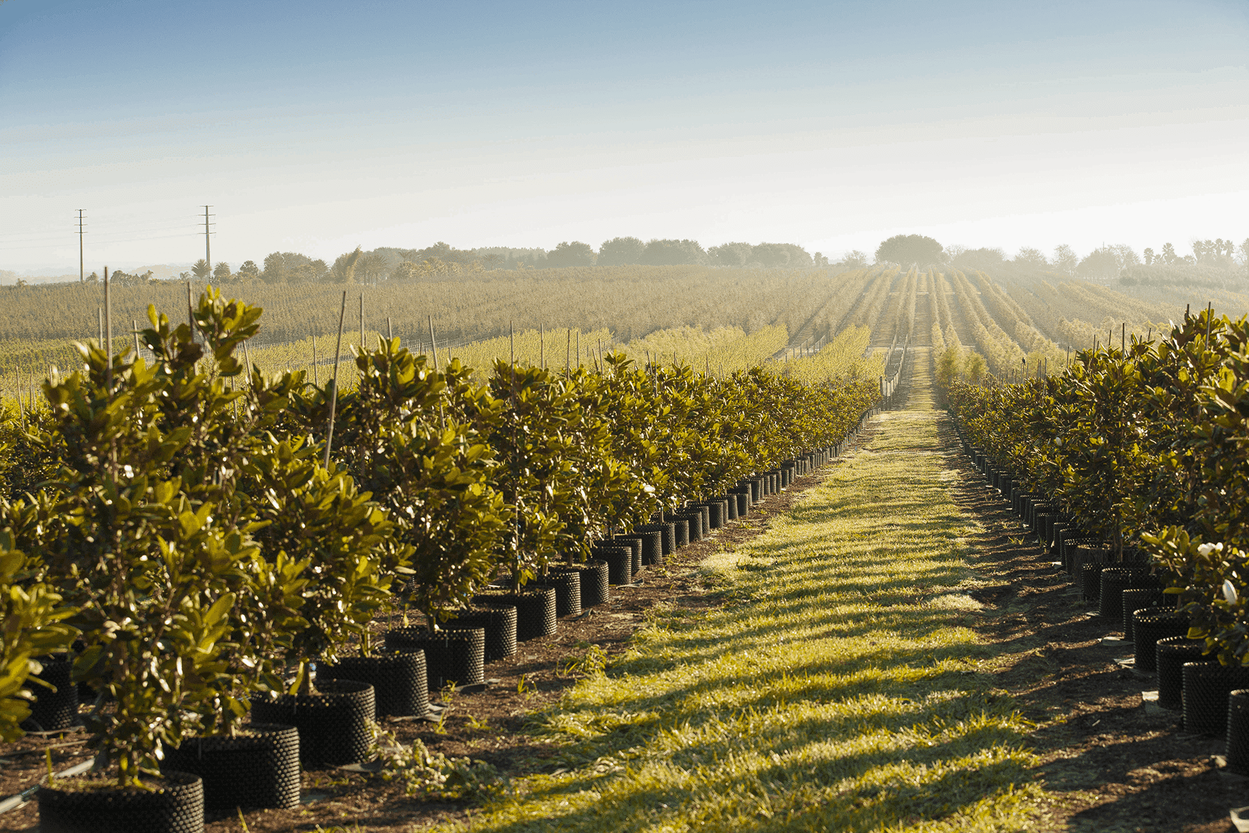 farmraces_cherrylake5