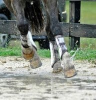 Horse cantering through muddy footing