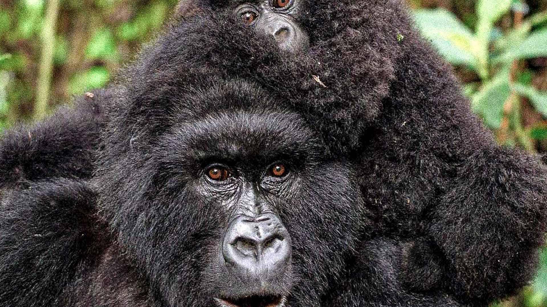 Klimaprojekt Virunga, Kongo