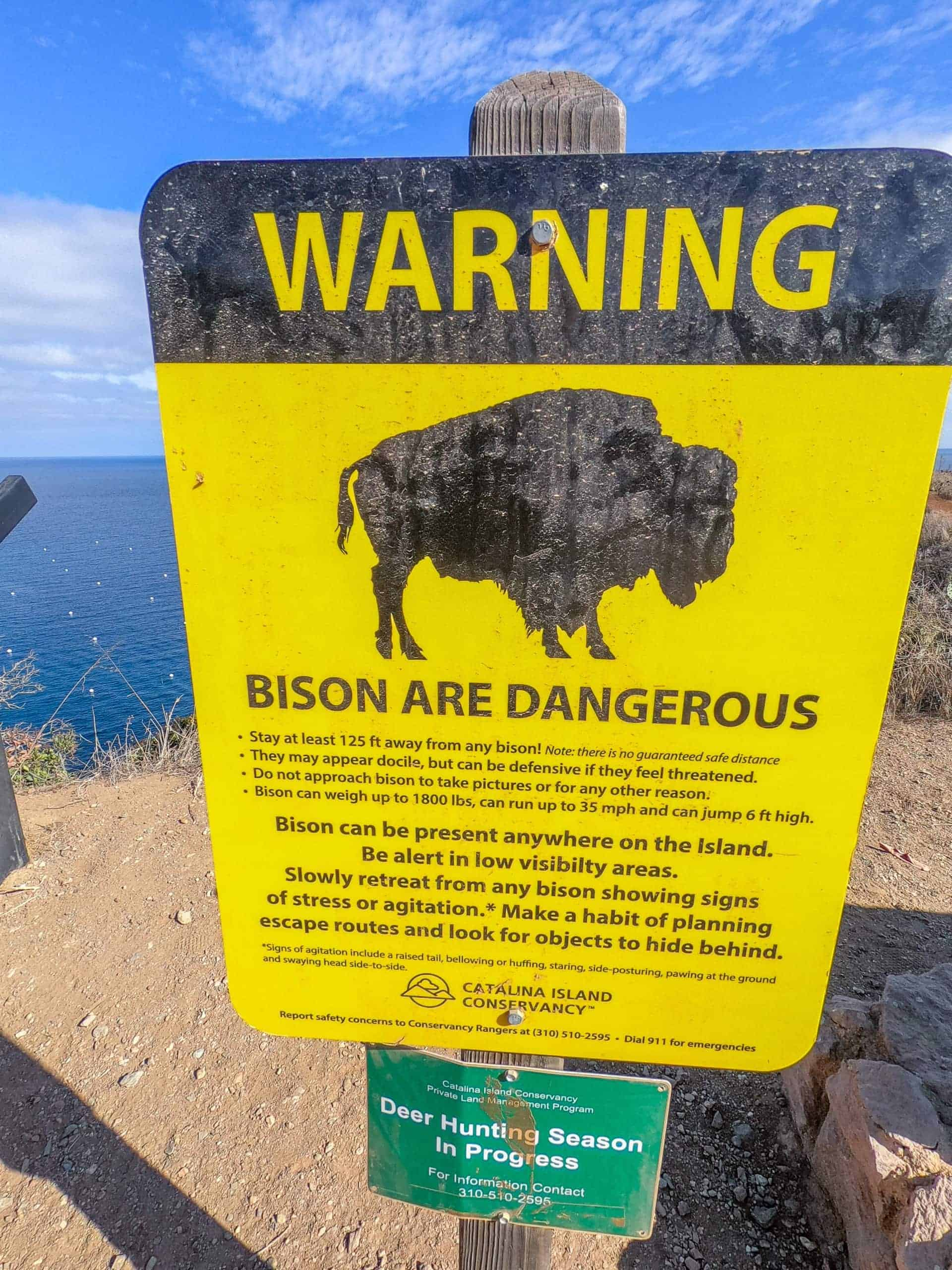 Bison on Catalina Island