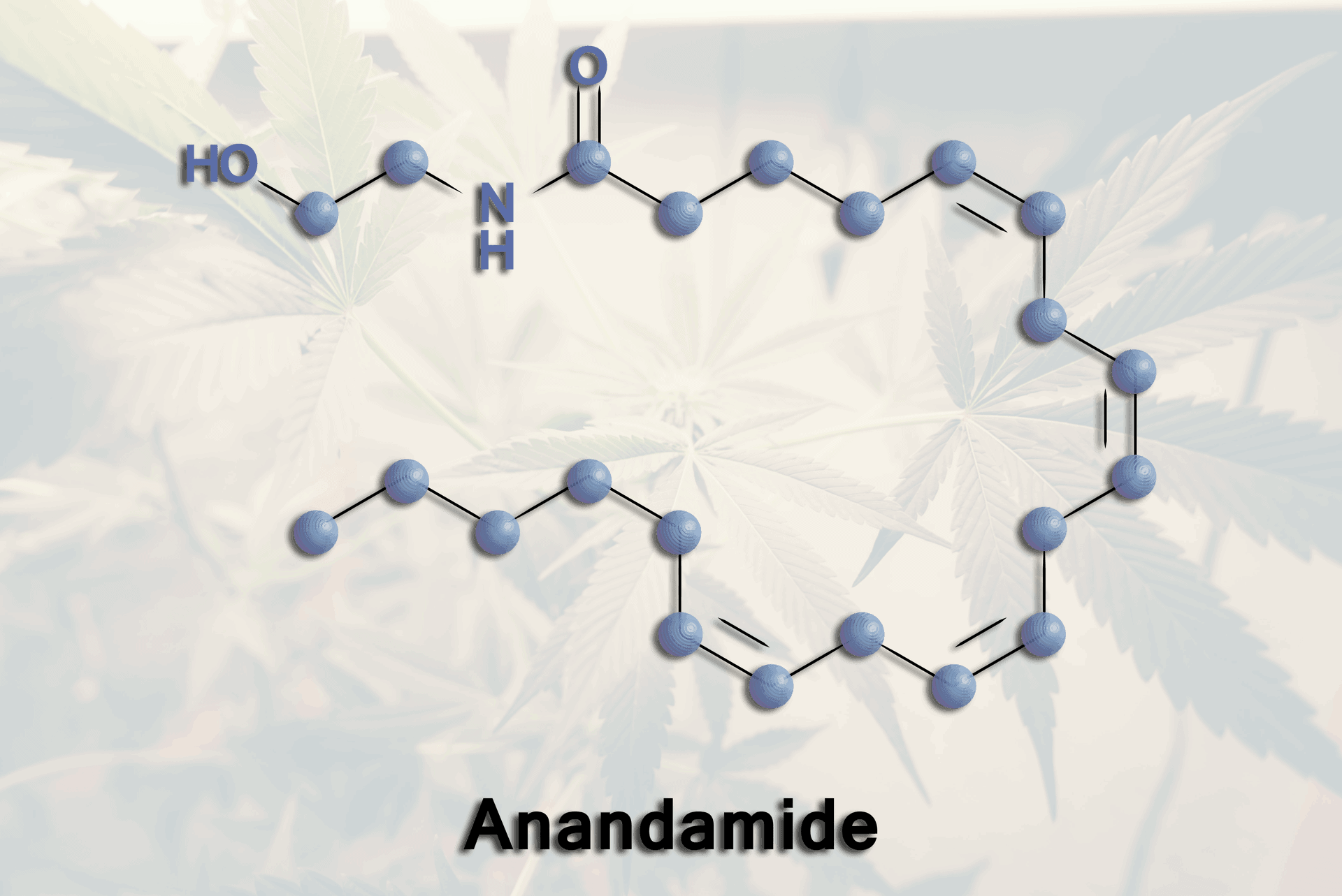 Anandamide – The Natural Cannabinoid Your Body Produces