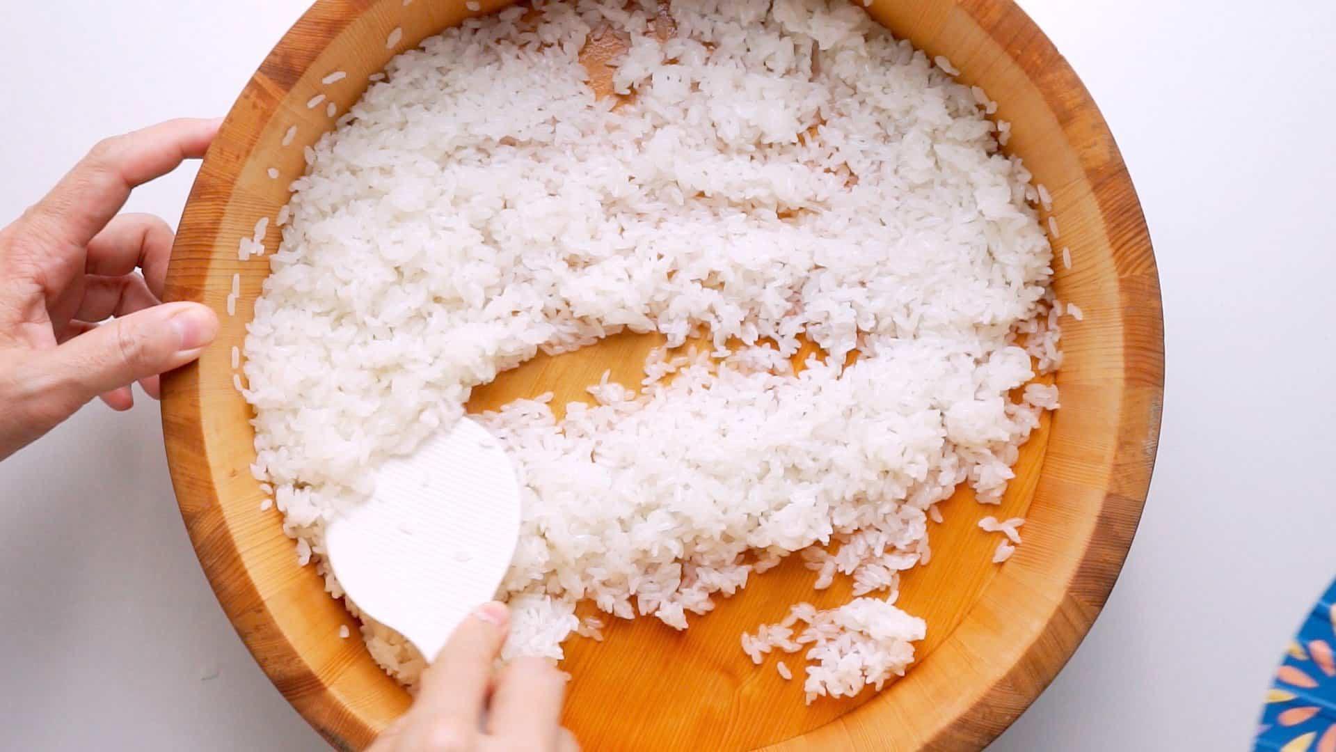 Folding sushi vinegar into rice.