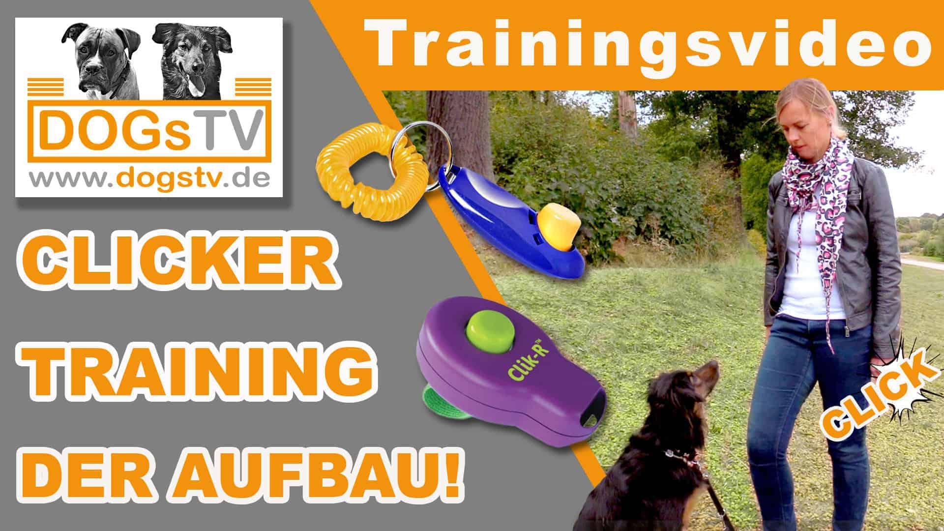 Clickertraining-Hund-Grundlagen-So-baust-du-den-Clicker-auf-Clickerregeln-dogstv