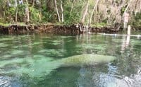 crystal river 3 sisters d Crystal River manatees: How to see, kayak or swim with manatees