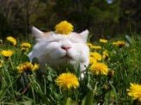 котка през пролетта