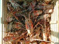florida lobster trap photo by Florida Keys News Bureau