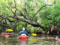 Kayaking Deer Creek in North Port.