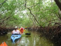 Mangrove tunnels at Lido Key Mangrove Trail. (Photo: Deb and Ed Higgins.)