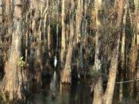 Loop Road in the Everglades: Birds and gators are easy to spot in winter. (Photo: Bonnie Gross)