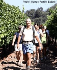 Families can hike in the kunde vineyards in sonoma on certain days.