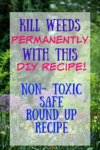 kill weeds permanently with this DIY recipe non toxic safe